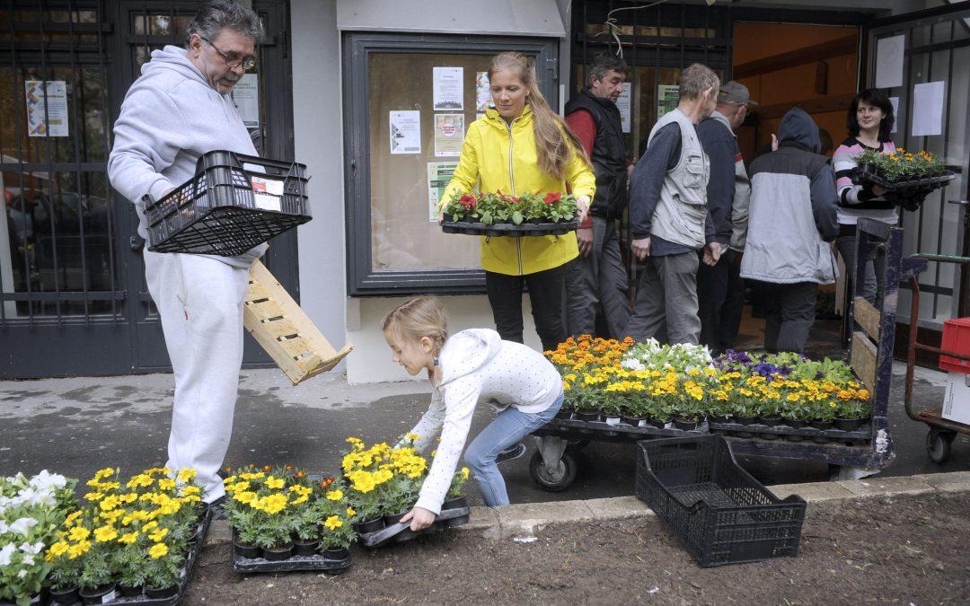 Idén a Föld Napja alkalmából szeretném virágba borítani Gazdagrétet